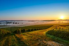 Bordeaux Vineyard Sunrise. Medoc France stock images