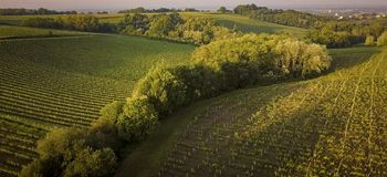 Bordeaux vineyards, Entre Deux Mers, Aquitaine, Gironde department, Aerial View royalty free stock photo