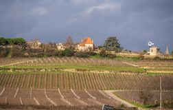 Bordeaux vineyards. Vineyards and hills in autumn. stock images