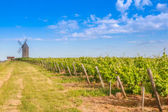 Bordeaux vingård med väderkvarnen Royaltyfri Foto