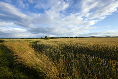 Border agricultural fields Stock Photo