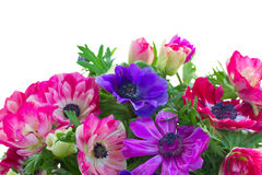 Border of anemone flowers Royalty Free Stock Photography