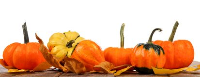 Border arrangement of autumn pumpkins on wood, isolated on white Royalty Free Stock Photos
