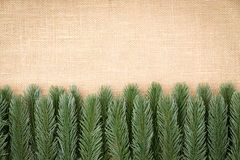 Border of artificial pine foliage on burlap royalty free stock images
