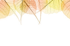 Border of Autumn color Leaves isilated on white Royalty Free Stock Photo