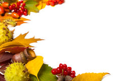 Border from autumn elements stock image