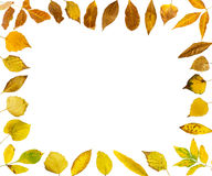Border of autumn leaves Royalty Free Stock Photos