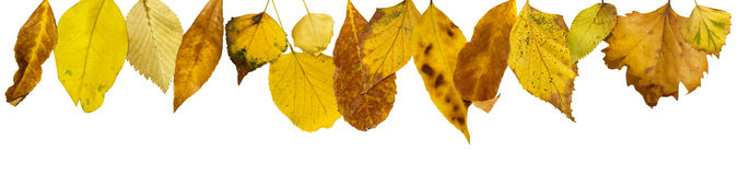 Border of autumn leaves Royalty Free Stock Image