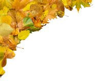 Border of autumn leaves Stock Photo