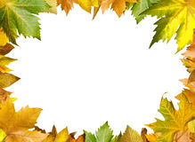 Border of autumn leaves Stock Images