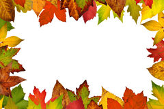 Border of autumn leaves Royalty Free Stock Images