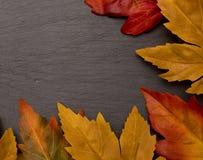 A Border of Autumn Leaves Stock Photos
