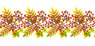 Border with autumn leaves and bunches of rowan. Stock Photo