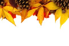 Border of autumn leaves and pine cones over white Royalty Free Stock Images