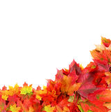 Border from autumn maple foliage Stock Photos