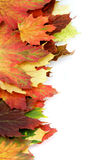Border of Autumn Maple Leafs Royalty Free Stock Images
