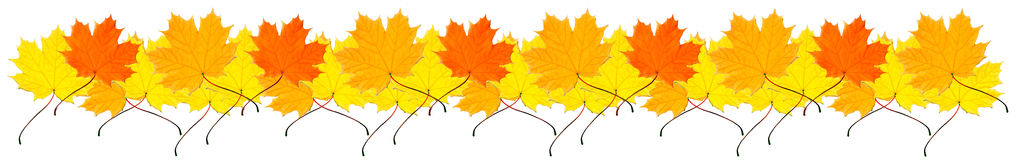 Border from autumn maple leaves stock images