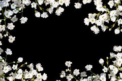 Border of baby's breath on black. Stock Images