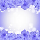Border or background with blue flower Stock Image
