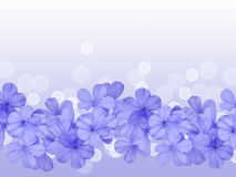 Border or background with blue flower Royalty Free Stock Image