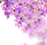 border background with pink blossom Stock Images