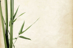 Border of bamboo leaves on paper Royalty Free Stock Photo