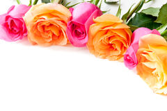 Border of beautiful orange and pink roses. On light background Stock Images
