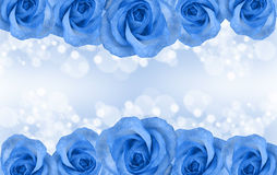 Border of blue roses Stock Photos