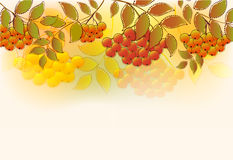 Border of bunches rowan and leaves. EPS10 illustration vector illustration