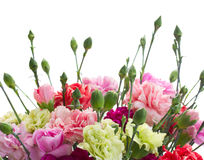 Border of carnation flowers Stock Photos