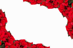 Border from christmas flowers Royalty Free Stock Photography