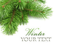 Border of Christmas tree branches. On white background Stock Photos