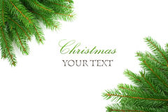 Border of Christmas tree branches. On white background Stock Image