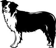 Border Collie. Line Art Illustration of a Border Collie Royalty Free Stock Image