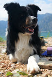 Border Collie. Portrait of Border Collie lying at the lake Royalty Free Stock Image