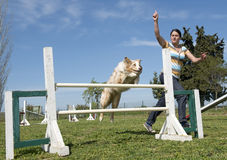 Border collie in agility Stock Photos