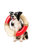 Border collie as beach guard Stock Photography