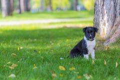 Border Collie bawić się w trawie outdoors i ma zabawę Zdjęcia Stock