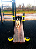 Border Collie on the bench stock photo