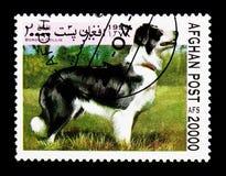Border collie (Canis Lupus familiaris), Hund-serie, circa 1999 stockfotografie