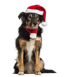 Border collie with christmas hat and scarf,. Sitting, isolated on white Stock Photography