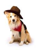 Border Collie Cowboy Stock Photo