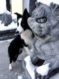 Border collie dans la ville chinoise Image stock