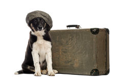 Border collie, das nahe bei einem alten Koffer sitzt Stockfotos