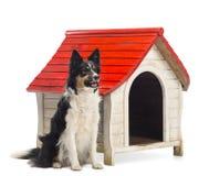 Border collie, das nahe bei einer Hundehütte sitzt und weg gegen weißen Hintergrund schaut stockfotos