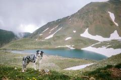 Border collie de la raza del perro en el fondo de un paisaje hermoso hermoso imagen de archivo