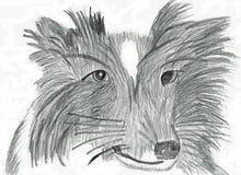 Border collie de pensamento - desenho de lápis Fotografia de Stock