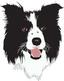 Border Collie dog - Illustration Royalty Free Stock Images