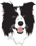 Border Collie dog - Illustration. Illustration of a Border Collie - dog royalty free illustration