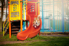 Border Collie dog on the playground Stock Photo